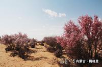 """大漠深处的""""桃花园"""""""