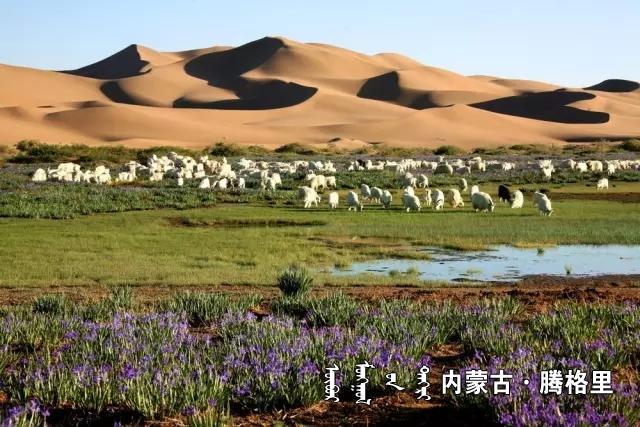 《大漠深处》  沙金达来.webp.jpg
