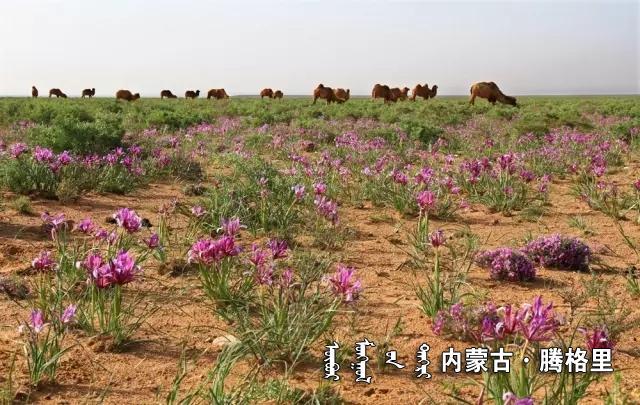 《六月的草原》  罗海龙.webp.jpg