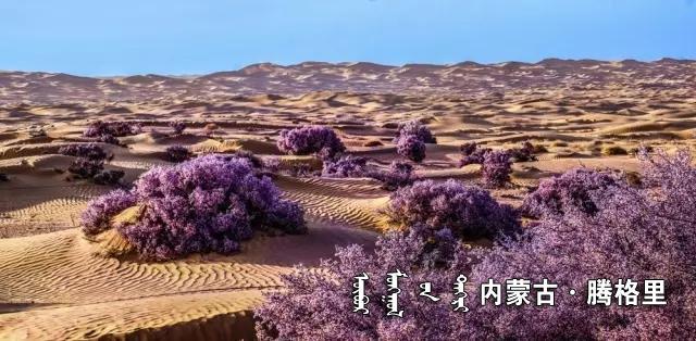 《沙漠之春》 嘎尔迪.webp.jpg
