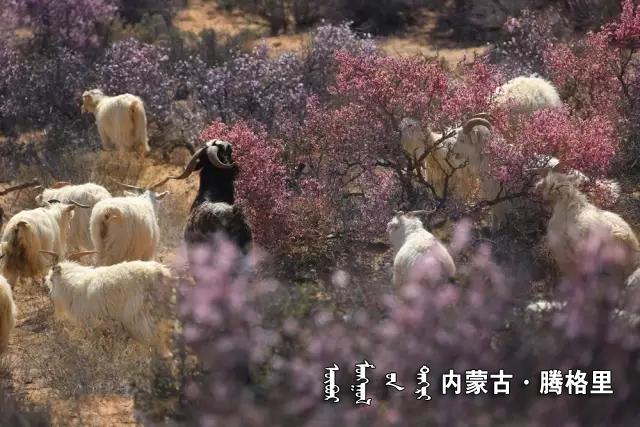 《桃花宴》 恩科图布新.webp.jpg